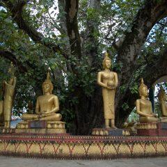 Buddha Sculptures